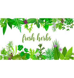 popular fresh realistic herbs and flowers logo vector image
