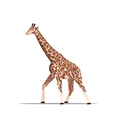 cartoon giraffe long-necked african animal vector image