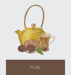 Gorgeous teapot transparent glass cup vector