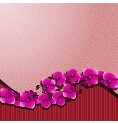 orchid with a pink vector image