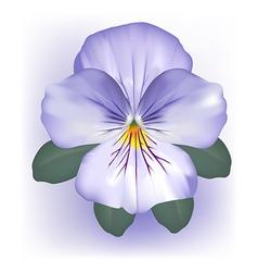 Pansy viola flower bloom vector