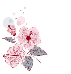 hibiscus flower on white background vector image vector image