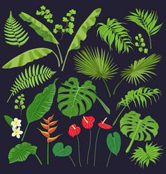 tropic leaves and flowers vector image