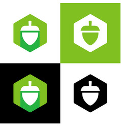 Acorn nut logo design template oak seed vector