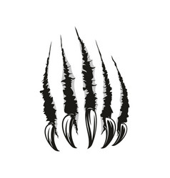 animal claws scratches trace torn slashes texture vector image