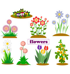 isolates from garden and forest flowers of spring vector image