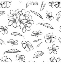 seamless pattern of plumeria flowers vector image