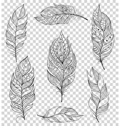 set of black feathers vector image