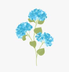 hydrangea flower vector image vector image