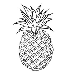 line drawing of mangosteen -simple line vector image vector image