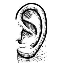 cartoon image of human ear vector image vector image
