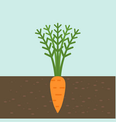 carrot vegetable with root in soil texture flat vector image