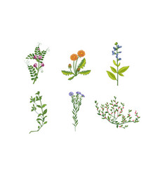 collection beautiful blooming garden flowers vector image