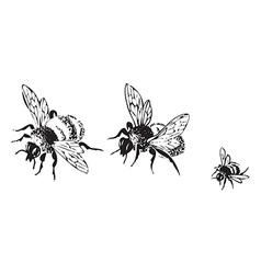 Flying bees isolated on white background vector