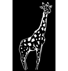 Hand-drawn pencil graphics giraffe Engraving vector
