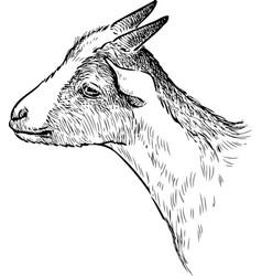 Sketch head a little goat vector