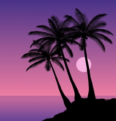 Coconut palms vector image