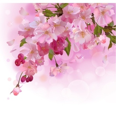 Pink card with cherry branch of flowers vector image vector image