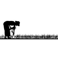 transplanting rice vector image vector image