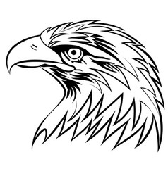 Bald eagle or hawk head mascot graphic eps vector