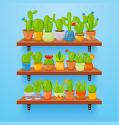 Cactuses and succulents in flower pots on shelves vector