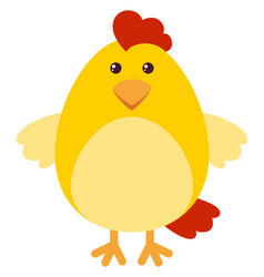 cute chicken on white background vector image
