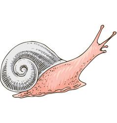 little pink garden snail vector image
