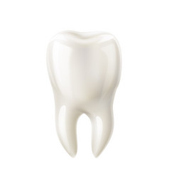 realistic white tooth mock up 3d icon vector image