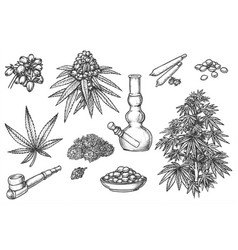 set sketches for marijuana items hemp leaves vector image