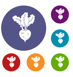 fresh beetroot icons set vector image