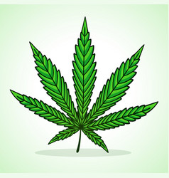 green cannabis leaf icon vector image