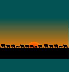Herd of elephants vector
