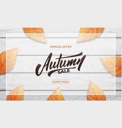autumn sale background layout design autumn vector image