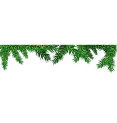 green christmas tree fir branches isolated vector image