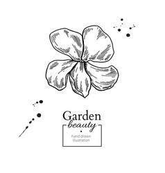 violet flower drawing hand drawn engraved vector image
