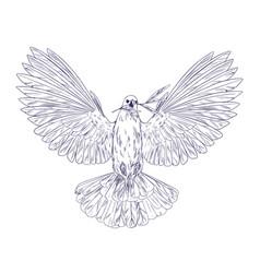 White dove holding olive branch in his beak vector