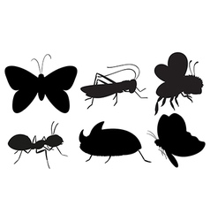 Black colored insects vector image vector image