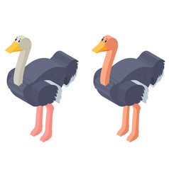 3d design for ostrich birds vector image