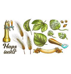 color hop leaves barley wheat rye ear opener set vector image