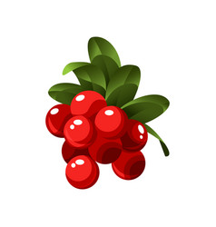 hand drawn branch lingonberry berries with leaves vector image
