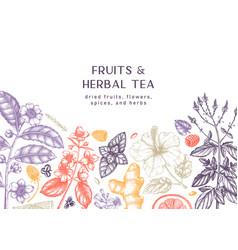 Hand sketched herbal tea ingredients banner vector