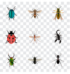 Realistic bee ladybird wasp and other vector