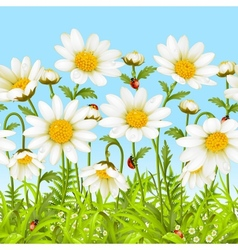 White flower and green grass vector