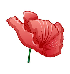 red poppy icon cartoon style vector image
