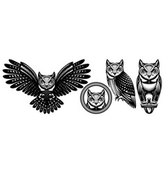 a set owls in different positions vector image