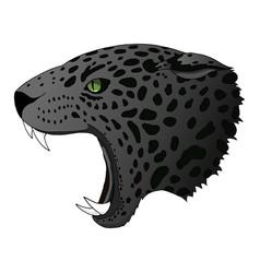Angry panther cougar portrait jaguar vector