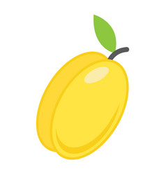 Apricot flat icon fruit and diet vector