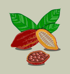 cocoa fruits and leaves whole fruit cut cocoa vector image