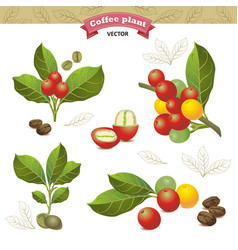 Collection of coffee beans on a branch of coffee vector