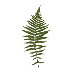 Fern leaf silhouette background vector